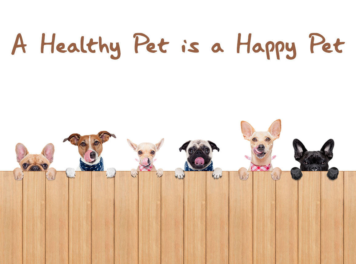 Peten Care Dog Food and Treats